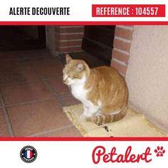 28.01.2017 / Chat / Colomiers / Haute-Garonne / France
