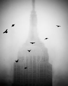 Empire State Building, NYC, Manhattan, NY, New York, crows, fog, mist, weather, moody, black and white, architecture, spire, urban, city,