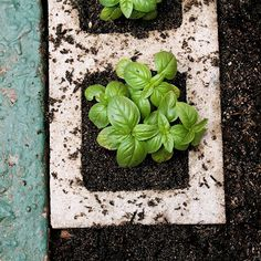 How to make a cinder block garden: an affordable alternative to raised beds!