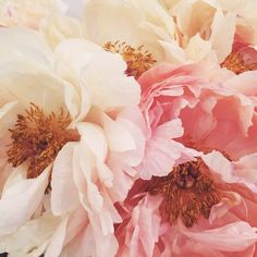 Shades of Pink & Pure Romance