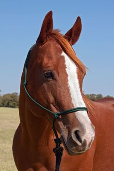Hunter Green Charity Rope HalterTM donates $1/halter to National 4-H Council www.4-H.org