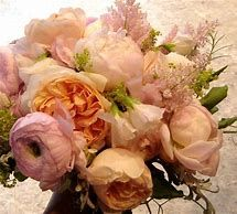 Image result for David Austin Rose Peach Coral