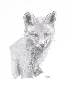 FOX 1  Limited Edition art drawing print by ArcadiaPortraits