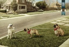 Liberá a tu perro