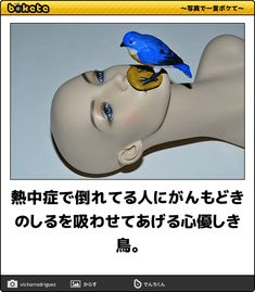 34000143 Funny Art, Life Is Good, Laughter, Funny Pictures, Hilarious, Jokes, Japan, Entertaining, Humor