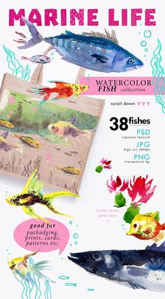 38 watercolor fishes by katflare | store on @creativemarket