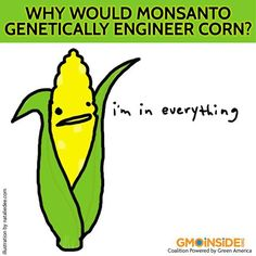 Why Would Monsanto Genetically Engineer Corn? Learn More Here: http://www.gmoinside.org/resources