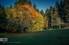 Herbstfarbe by RIserPhotography #fadighanemmd
