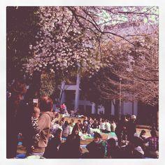 [お花見*2012/04/08]    近所の公園で❀お花見ちう╰(✿´⌣`✿)╯♡