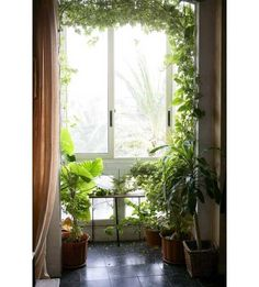 15 Gorgeous Phyto Design Ideas and Indoor Plants for Modern Interior Decorating…