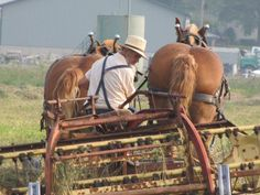 Work horses and farmers working LONG days way into the evening to get the fields plowed and ready