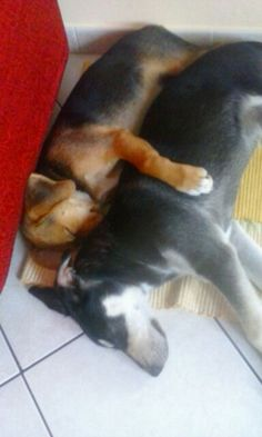 Dormi bene sotto la mia zampina....♡amico mio.....♡
