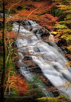 Slovenian forest treasures by darkogersak #nature #mothernature #travel #traveling #vacation #visiting #trip #holiday #tourism #tourist #photooftheday #amazing #picoftheday