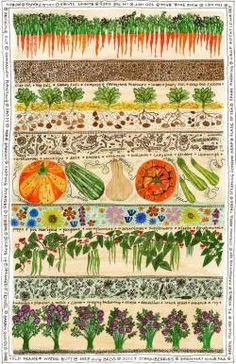 "peonyandbee: "" Fiona Willis "" Garden Illustration, Botanical Illustration, Vegetable Illustration, Allotment Gardening, Organic Gardening, Vegetable Prints, Veg Patch, Fruit And Veg, Food Illustrations"