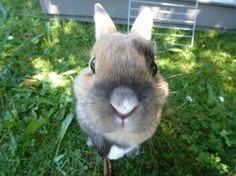 Bunny reaches up, up, up toward the camera - July 24, 2013