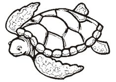 Free Printable Turtle Coloring Pages For Kids Fundraiser For Kids
