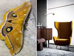 colourfutures trends: ochregold old yellow - vintage