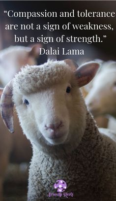 Lamb Happy Birthday Card - animal gift ideas animals and pets diy customize Animals And Pets, Baby Animals, Cute Animals, Baby Boy Games, How To Start Meditating, Down Quotes, Animal Reiki, Dachshund Funny, Tier Fotos