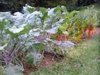 Yes you can grow a fall garden. http://www.veggiegardeningtips.com/fall-gardening/
