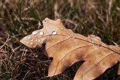 Vesipisaroita Moth, Insects, Animals, Animales, Animaux, Animal Memes, Animal, Animais, Dieren