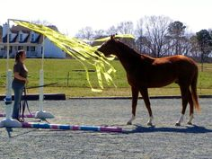 We started desensitizing our new young horse