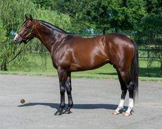 River Oaks Farms Inc. Thoroughbred Horses - Stallions at Stud Pretty Horses, Beautiful Horses, Horse Names, Racehorse, Palomino, Horse Racing, Coat Patterns, Animals, Animales