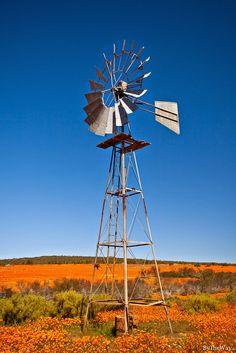 Afrique du Sud: le Namaqualand Wind Turbine, South Africa, Fresh