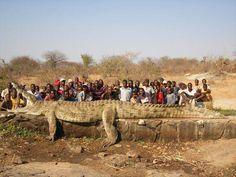This huge crocodile, that some say is the biggest crocodile in the world, is 22 feet long, and has a weight of 2500 pounds! There are rumors of people going fishing that never come back in the Nigeria river, the largest river in western Africa. If this crocodile really exists, that is not surprising!