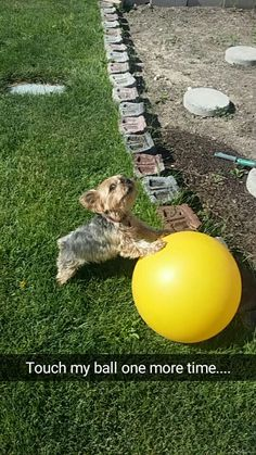 This pic reminds me of my tiny Maggie. She loved large balls.