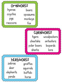 Types of Eaters Freebie (Interactive Science Notebook)