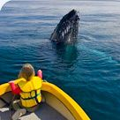 The perfect location for whale watching Whales come heart-stoppingly close to Narooma, brought in on warm, … Continue reading → Whale Watching, Australia, Colour, Color, Colors