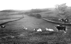 Photo of Skipton, Moor Road 1923 from Francis Frith Farming, Countryside, Nostalgia, Places, Lugares