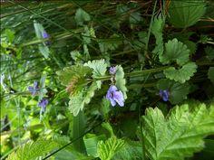 Frühlingskräuter entdecken mit den Wilden Weibern  Kräuterwanderung im Frühjahr