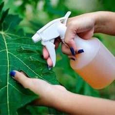 This Amazing Natural Pesticide Recipe Is So Effective You Can Get Rid Of Pests In No Time How to Attract Frogs andOrganic spray against ScGet Rid of Animal Pests W Garden Bugs, Garden Insects, Diy Garden, Garden Pests, Garden Care, Garden Web, Balcony Garden, Garden Ideas, Organic Gardening