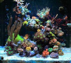 Polarcollision's 8 gallon IM Nuvo nano reef cube - November 2013 Featured Reef Aquarium Coral Reef Aquarium, Saltwater Aquarium Fish, Nano Aquarium, Saltwater Tank, Marine Aquarium, Freshwater Aquarium, Aquascaping, Underwater Images, Underwater World