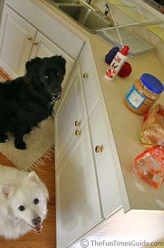 Are Human Foods Okay For Dogs To Eat? See Which Ones Are Safe And Which Ones Are NOT!