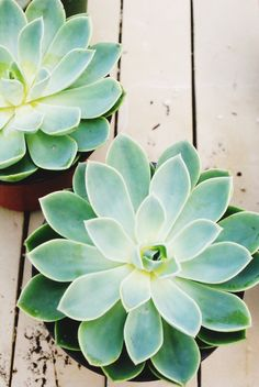 All about succulents via Jillianastasia