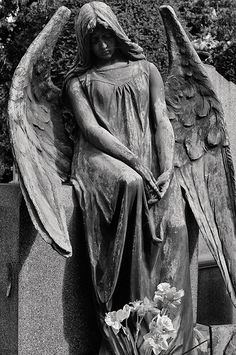 Fallen Angel                                                                                                                                                                                 More