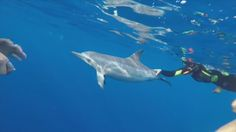 Are tourists in Hawaii getting too close to the dolphins?