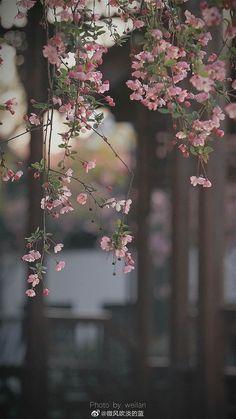 Wallpaper Nature Flowers, Flower Background Wallpaper, Beautiful Flowers Wallpapers, Anime Scenery Wallpaper, Aesthetic Pastel Wallpaper, Flower Backgrounds, Pretty Wallpapers, Aesthetic Wallpapers, Nature Aesthetic