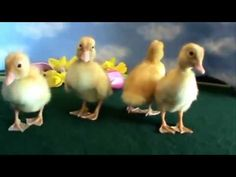 video lucu binatang: funny animals baby compilation