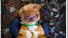 Picasso il cane cubista che nessuno voleva: negli Usa corsa all'adozione per lui e il fratellino :http://www.qualazampa.news/2017/03/07/picasso-il-cane-cubista-che-nessuno-voleva-negli-usa-corsa-alladozione-per-lui-e-il-fratellino/