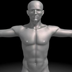 Realistic Human Male 3D Model-   Realistic Human Male Model.- 6970 Polygon Faces.- Shaded.- uvw unwraped ready for the textures.- Along with uvw map with defined muscles to be the base of the texures.- Max, 3ds, Obj formats - #3D_model #Men Women Babies Children