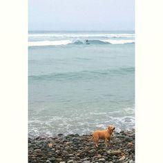La de hoy en Instagram: Como siempre todos al agua nadie se queda afuera! #surf #Lima #Peru #learntosurf #surfinglessons #EndlessSummer #Miraflores #Makaha #beachlife #surfisfun #surferdog #beach #surfwithfriends - http://ift.tt/1K8gmug