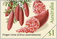 Citrus australasica featured on an Australian postage stamp. Grazing Animals, Rainforest Trees, Finger, Yellow Fruit, Lime, Australian Plants, Food Stamps, Exotic Fruit, Vintage Stamps