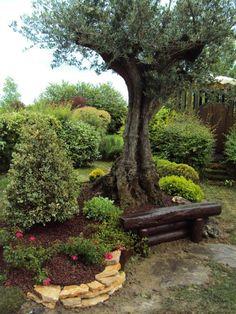 Abbellire un albero di ulivo! Ecco 16 splendidi esempi per ispirarvi Come