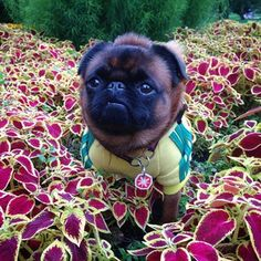 """My ship must've landed in a crazy garden."" 