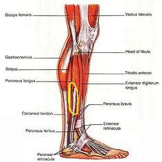 <b>Lower</b> <b>leg</b> pain