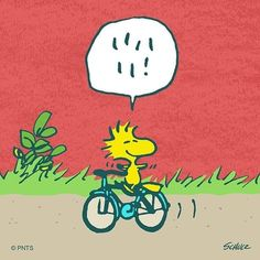Beautiful day for a bike ride Snoopy Videos, Snoopy Comics, Peanuts Comics, Snoopy Wallpaper, Cartoon Birds, Peanuts Characters, Cartoon Characters, Joe Cool, Snoopy Quotes