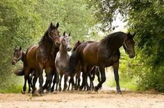 A herd of horses Wall Decal